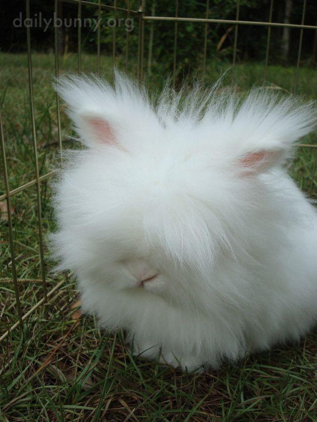 Scoreland she a happy bunny part bunny brooks